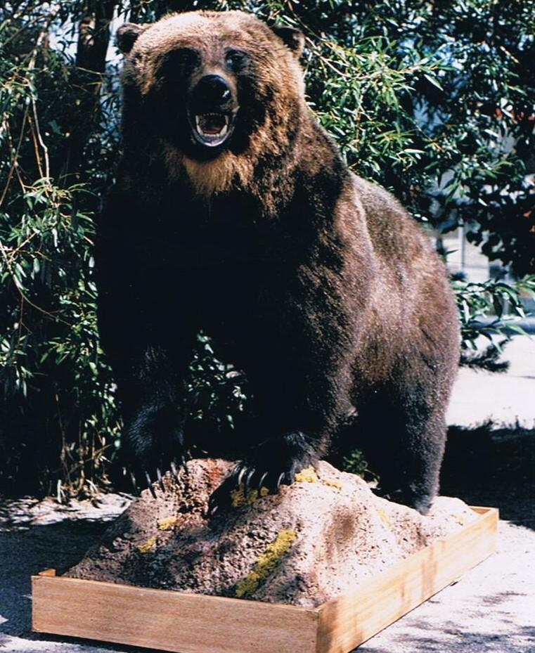 Mounted Grizzly