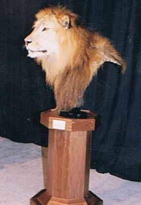Lion Shoulder on Pedestal