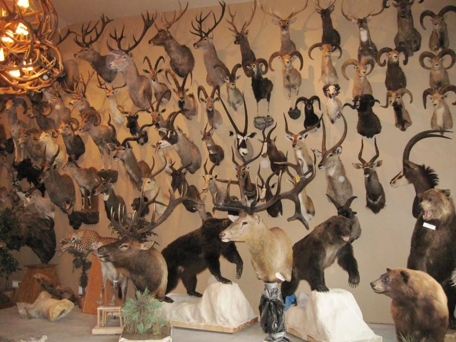 Wall of Mounts