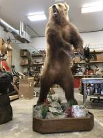 Bear in the Shop